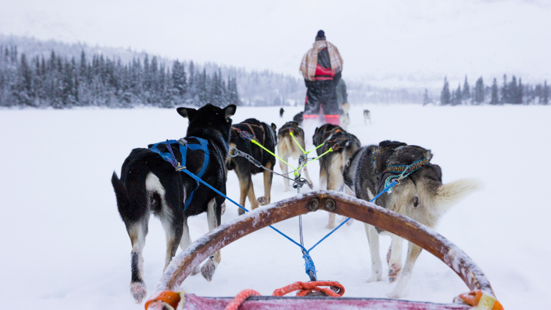 Au Pair: Riding Huskies on the Frozen Lake, Hemsedal