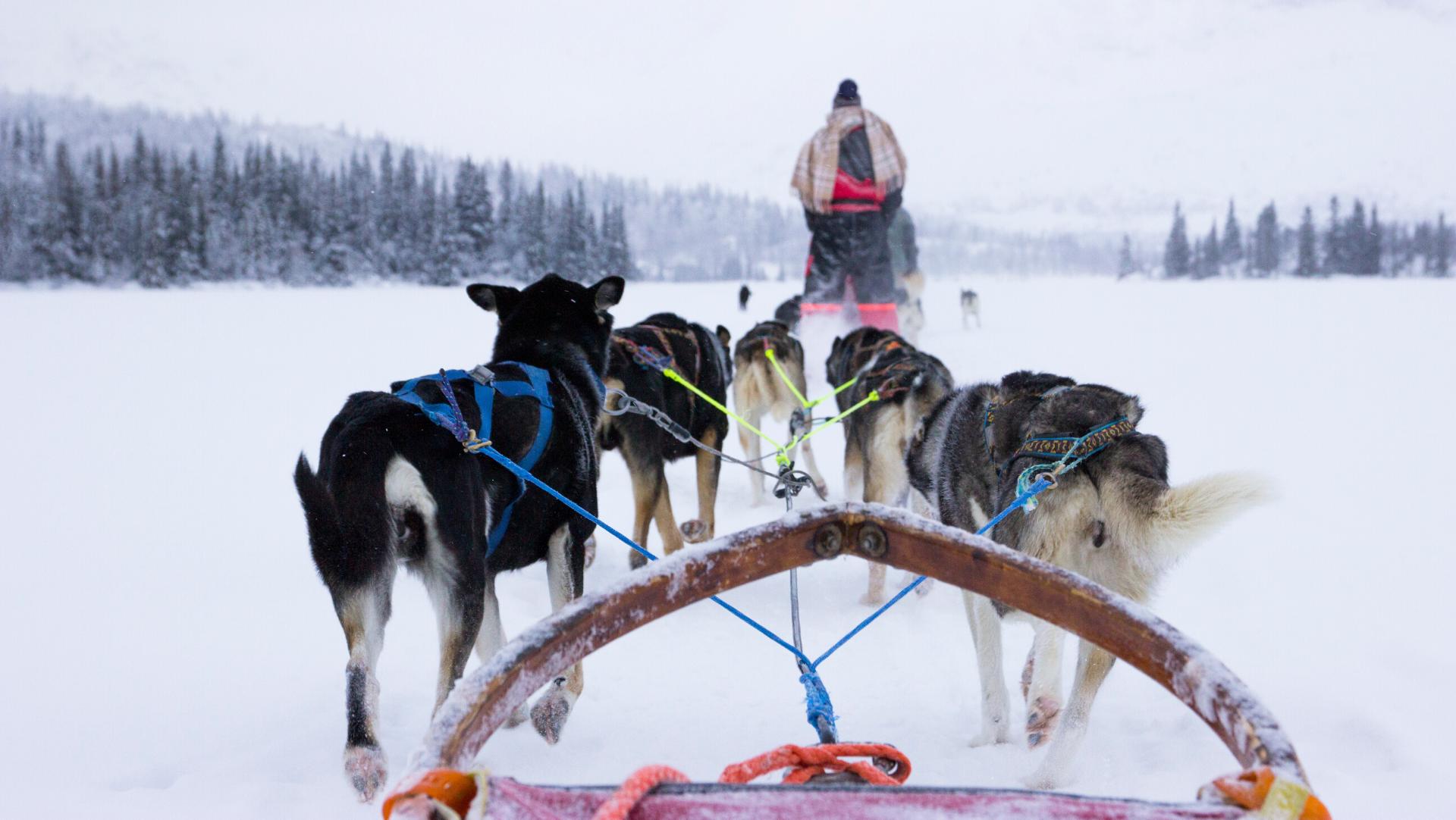 Au Pair: Riding Huskies on the Frozen Lake, Hemsedal